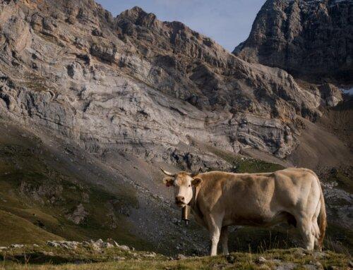 La Comisión Europea lanza una consulta pública sobre el futuro de las áreas rurales
